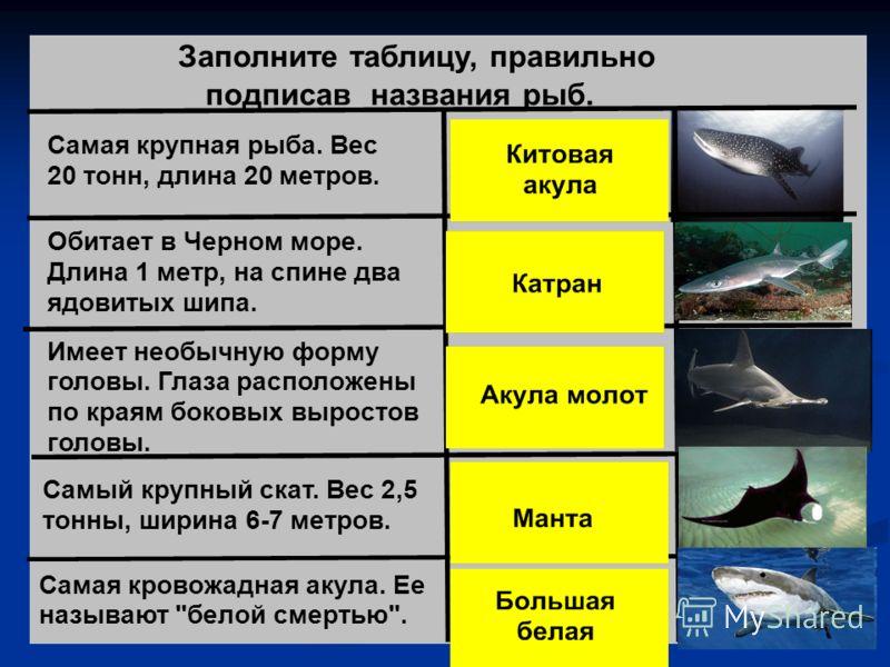 Заполните таблицу, правильно подписав названия рыб. Самая крупная рыба. Вес 20 тонн, длина 20 метров. Обитает в Черном море. Длина 1 метр, на спине два ядовитых шипа. Имеет необычную форму головы. Глаза расположены по краям боковых выростов головы. С