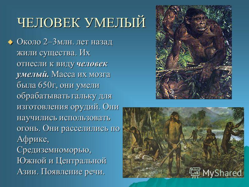 ЧЕЛОВЕК УМЕЛЫЙ Около 2–3млн. лет назад жили существа. Их отнесли к виду человек умелый. Масса их мозга была 650г, они умели обрабатывать гальку для изготовления орудий. Они научились использовать огонь. Они расселились по Африке, Средиземноморью, Южн