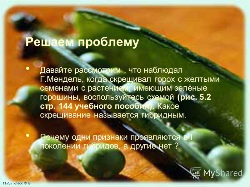 Решаем проблему Давайте рассмотрим, что наблюдал Г.Мендель, когда скрещивал горох с желтыми семенами с растением, имеющим зелёные горошины, воспользуйтесь схемой (рис. 5.2 стр. 144 учебного пособия). Какое скрещивание называется гибридным. Почему одн