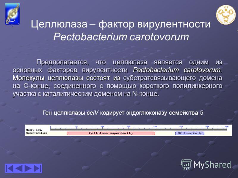 Предполагается, что целлюлаза является одним из основных факторов вирулентности Pectobacterium carotovorum. Молекулы целлюлазы состоят из субстратсвязывающего домена на С-конце, соединенного с помощью короткого полилинкерного участка с каталитическим