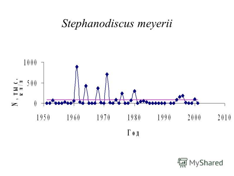 Stephanodiscus meyerii