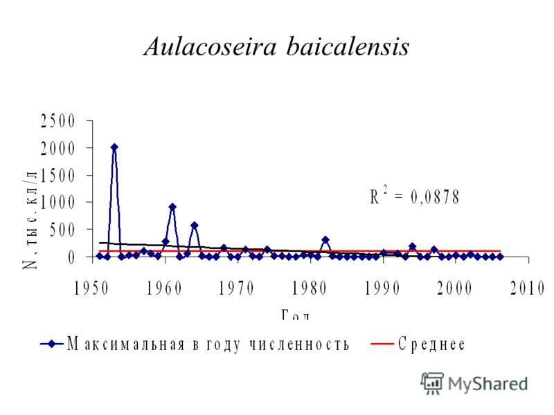 Aulacoseira baicalensis