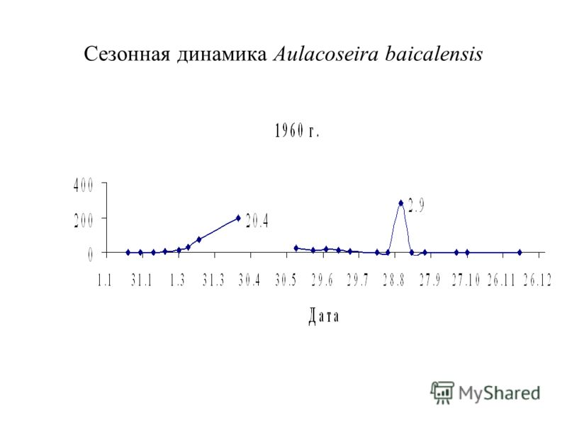 Сезонная динамика Aulacoseira baicalensis