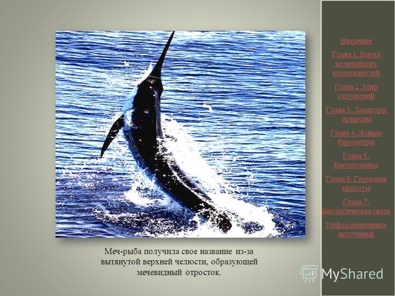 Меч-рыба получила свое название из-за вытянутой верхней челюсти, образующей мечевидный отросток. Введение Глава 1. Наука величайших возможностей Глава 2. Мир ощущений Глава 3. Локаторы природы Глава 4. Живые барометры Глава 5. Биомеханика Глава 6. Га