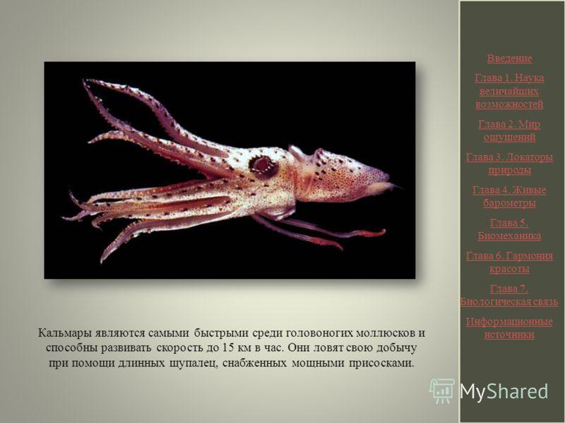 Кальмары являются самыми быстрыми среди головоногих моллюсков и способны развивать скорость до 15 км в час. Они ловят свою добычу при помощи длинных щупалец, снабженных мощными присосками. Введение Глава 1. Наука величайших возможностей Глава 2. Мир
