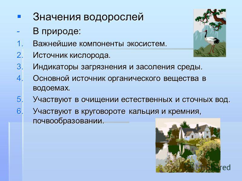 Значения водорослей Значения водорослей -В природе: 1.Важнейшие компоненты экосистем. 2.Источник кислорода. 3.Индикаторы загрязнения и засоления среды. 4.Основной источник органического вещества в водоемах. 5.Участвуют в очищении естественных и сточн