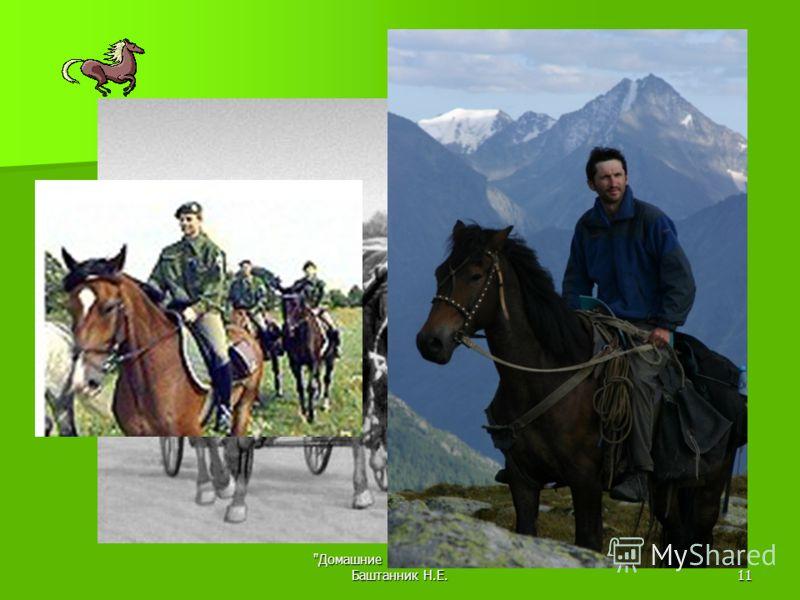 Домашние животные 7 кл. Баштанник Н.Е.10 Конный спорт КУМЫС – сквашенное молоко кобылиц – для лечения туберкулеза, сердечно- сосудистой системы, нервной системы