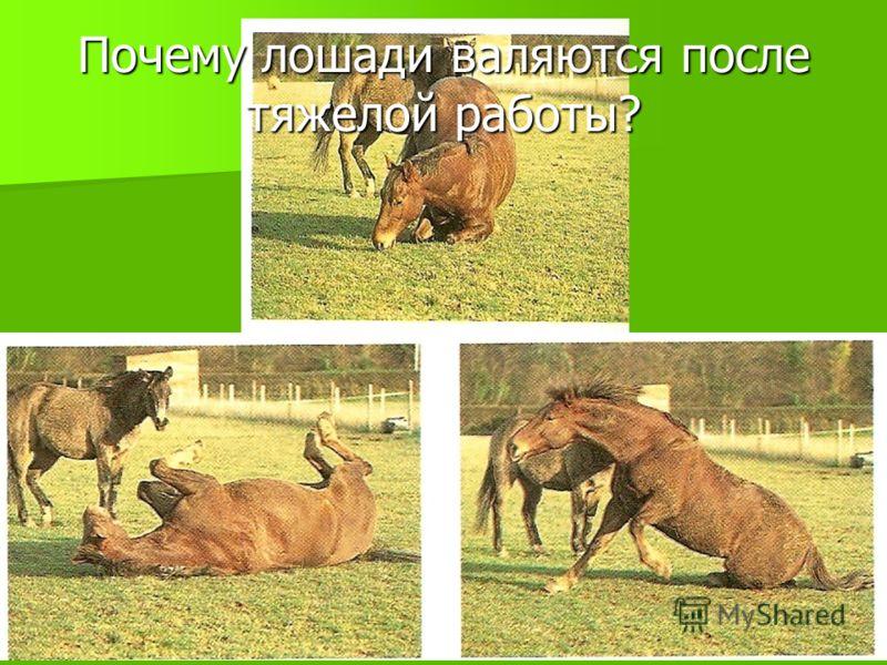 Домашние животные 7 кл. Баштанник Н.Е.11