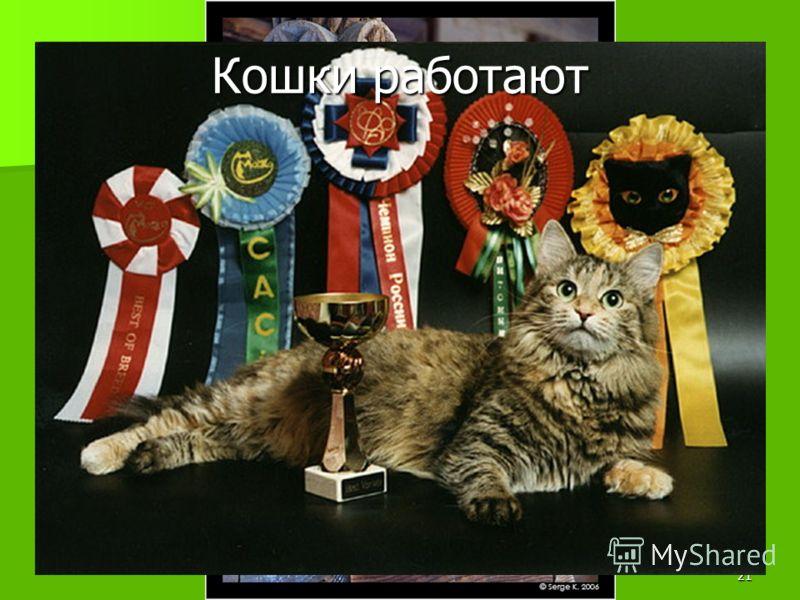 Домашние животные 7 кл. Баштанник Н.Е.20 Первый в мире дрессировщик кошек – Валерий Мусин (он работал в Московском цирке с 1968 по 1990 г) Юрий Куклачев