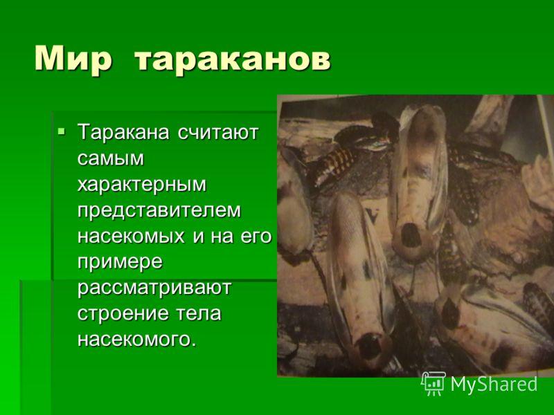 Мир тараканов Таракана считают самым характерным представителем насекомых и на его примере рассматривают строение тела насекомого. Таракана считают самым характерным представителем насекомых и на его примере рассматривают строение тела насекомого.