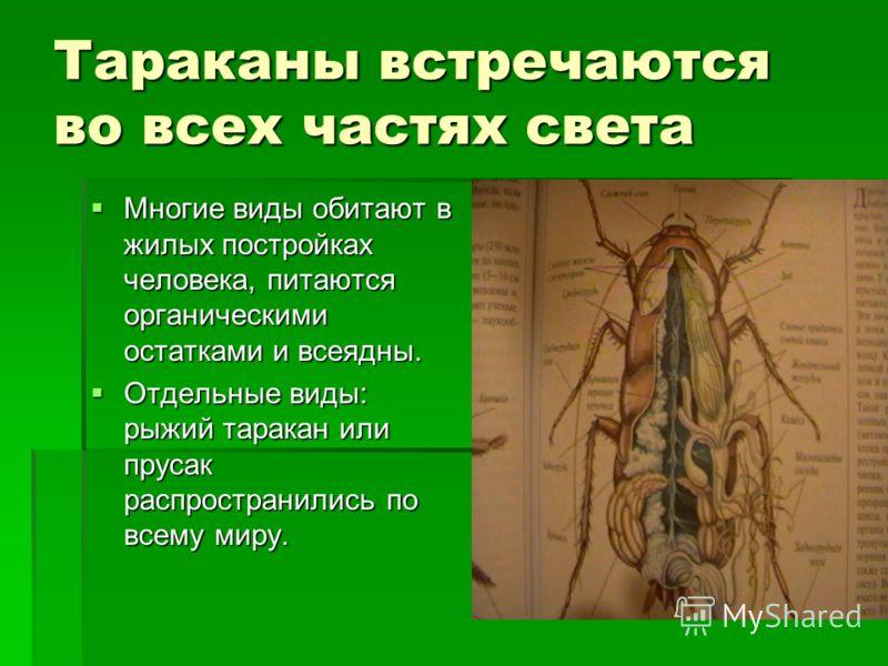 Тараканы встречаются во всех частях света Многие виды обитают в жилых постройках человека, питаются органическими остатками и всеядны. Многие виды обитают в жилых постройках человека, питаются органическими остатками и всеядны. Отдельные виды: рыжий