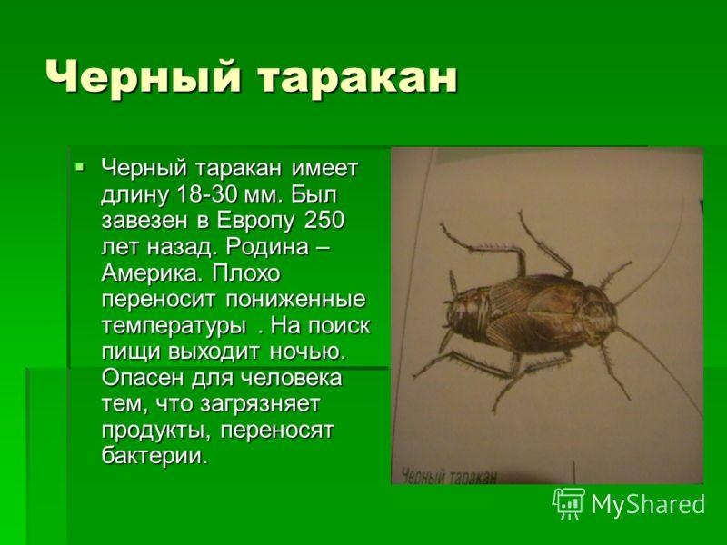 Черный таракан Черный таракан имеет длину 18-30 мм. Был завезен в Европу 250 лет назад. Родина – Америка. Плохо переносит пониженные температуры. На поиск пищи выходит ночью. Опасен для человека тем, что загрязняет продукты, переносят бактерии. Черны