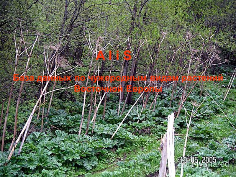 База данных по чужеродным видам растений Восточной Европы A l i S