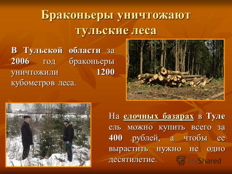 Браконьеры уничтожают тульские леса В Тульской области за 2006 год браконьеры уничтожили 1200 кубометров леса. В Тульской области за 2006 год браконьеры уничтожили 1200 кубометров леса. На елочных базарах в Туле ель можно купить всего за 400 рублей,