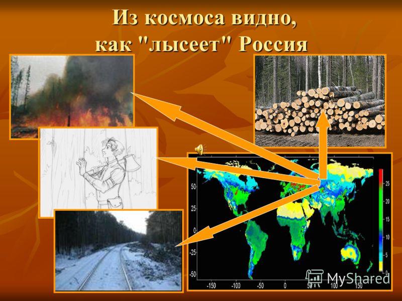 Из космоса видно, как лысеет Россия Из космоса видно, как лысеет Россия
