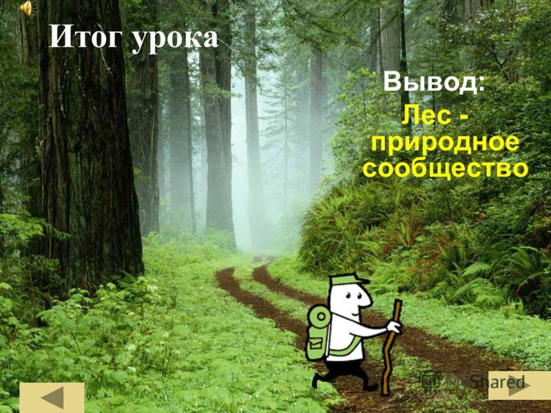 Итог урока Вывод: Лес - природное сообщество