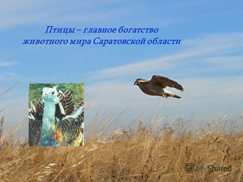 Птицы – главное богатство животного мира Саратовской области