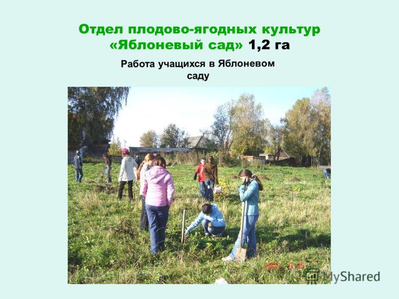 Отдел плодово-ягодных культур «Яблоневый сад» 1,2 га Работа учащихся в Яблоневом саду