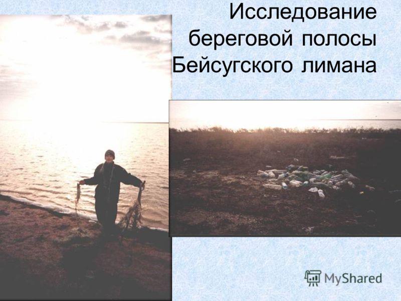 Исследование береговой полосы Бейсугского лимана