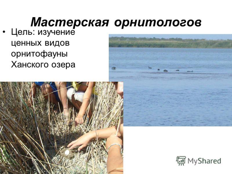 Мастерская орнитологов Цель: изучение ценных видов орнитофауны Ханского озера