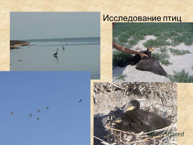 Исследование птиц