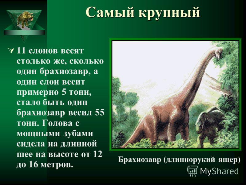 Самый крупный 11 слонов весят столько же, сколько один брахиозавр, а один слон весит примерно 5 тонн, стало быть один брахиозавр весил 55 тонн. Голова с мощными зубами сидела на длинной шее на высоте от 12 до 16 метров. Брахиозавр (длиннорукий ящер)