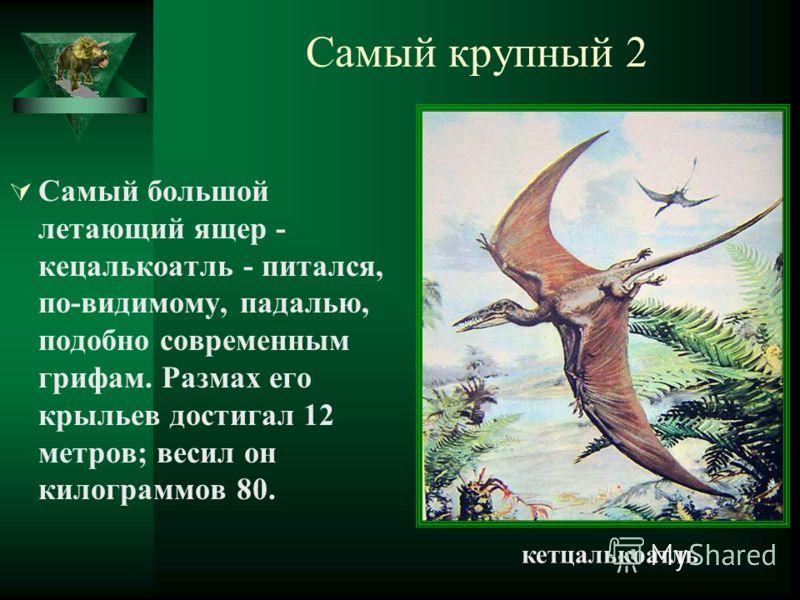 Самый крупный 2 Самый большой летающий ящер - кецалькоатль - питался, по-видимому, падалью, подобно современным грифам. Размах его крыльев достигал 12 метров; весил он килограммов 80. кетцалькоатль