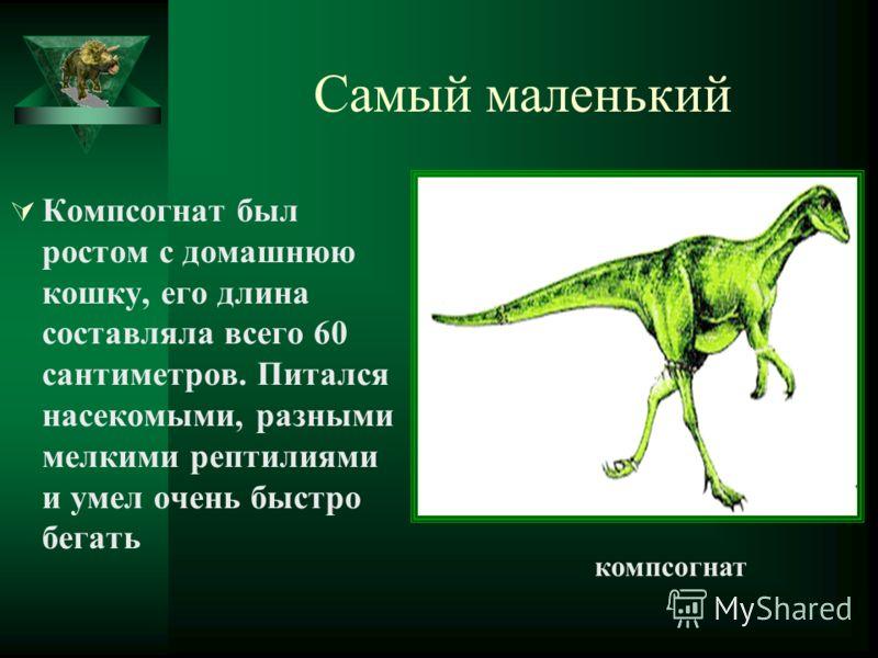 Самый маленький Компсогнат был ростом с домашнюю кошку, его длина составляла всего 60 сантиметров. Питался насекомыми, разными мелкими рептилиями и умел очень быстро бегать компсогнат