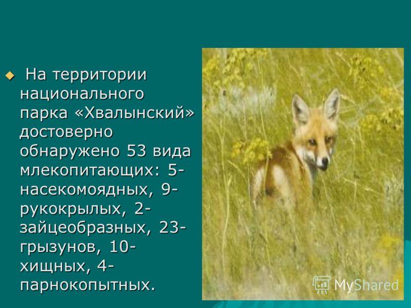 На территории национального парка «Хвалынский» достоверно обнаружено 53 вида млекопитающих: 5- насекомоядных, 9- рукокрылых, 2- зайцеобразных, 23- грызунов, 10- хищных, 4- парнокопытных. На территории национального парка «Хвалынский» достоверно обнар
