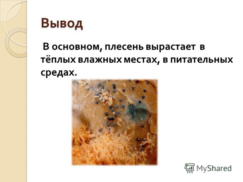 Вывод В основном, плесень вырастает в тёплых влажных местах, в питательных средах.