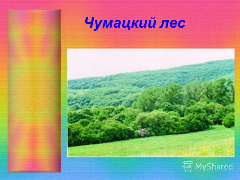 Чумацкий лес