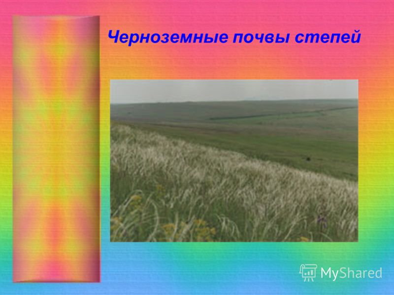 Черноземные почвы степей
