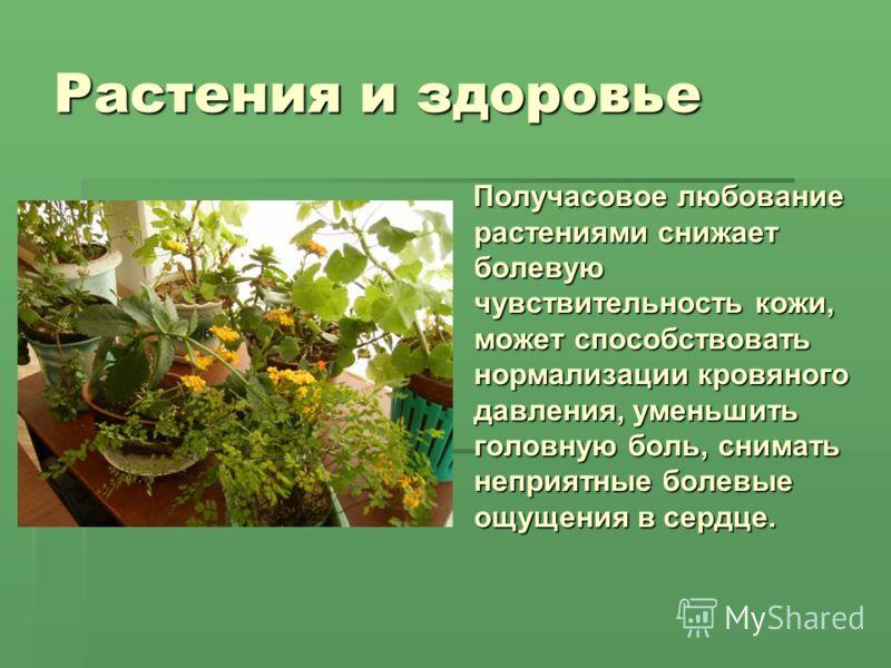 Растения и здоровье Получасовое любование растениями снижает болевую чувствительность кожи, может способствовать нормализации кровяного давления, уменьшить головную боль, снимать неприятные болевые ощущения в сердце. Получасовое любование растениями