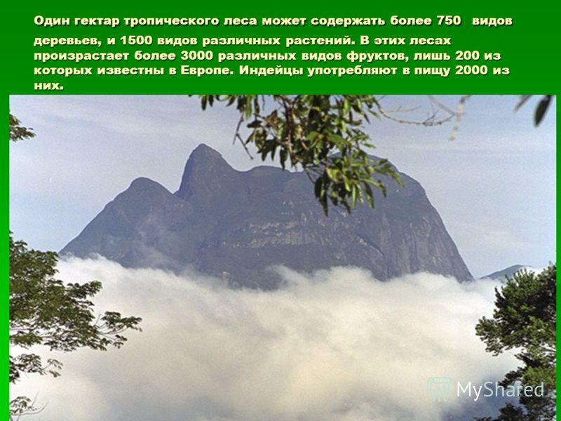 Один гектар тропического леса может содержать более 750 видов деревьев, и 1500 видов различных растений. В этих лесах произрастает более 3000 различных видов фруктов, лишь 200 из которых известны в Европе. Индейцы употребляют в пищу 2000 из них.