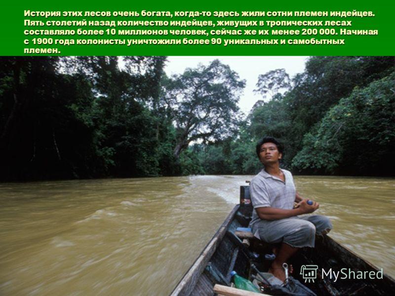 История этих лесов очень богата, когда-то здесь жили сотни племен индейцев. Пять столетий назад количество индейцев, живущих в тропических леcах составляло более 10 миллионов человек, сейчас же их менее 200 000. Начиная с 1900 года колонисты уничтожи
