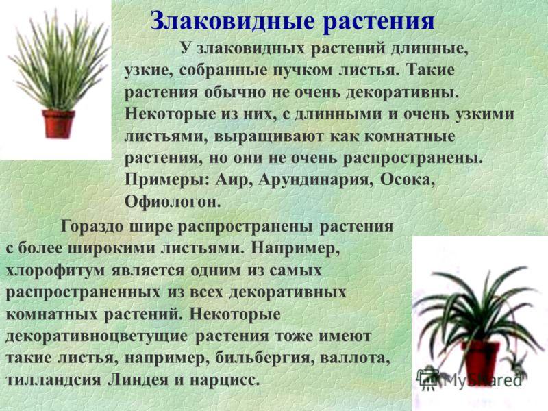 При выборе растения большое значение имеет как его размер, так и облик. Небольшое, низкое растение выглядит неуместно на фоне большой голой стены, а высокое древовидное едва поместится на узком подоконнике.