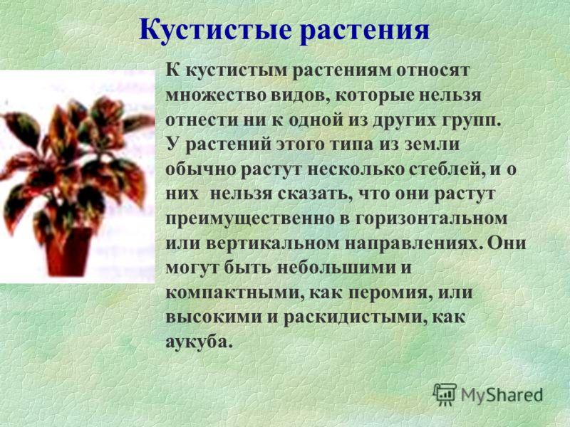 Злаковидные растения У злаковидных растений длинные, узкие, собранные пучком листья. Такие растения обычно не очень декоративны. Некоторые из них, с длинными и очень узкими листьями, выращивают как комнатные растения, но они не очень распространены.