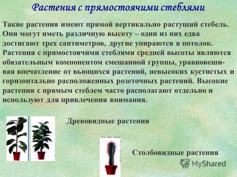 Кустистые растения К кустистым растениям относят множество видов, которые нельзя отнести ни к одной из других групп. У растений этого типа из земли обычно растут несколько стеблей, и о них нельзя сказать, что они растут преимущественно в горизонтальн