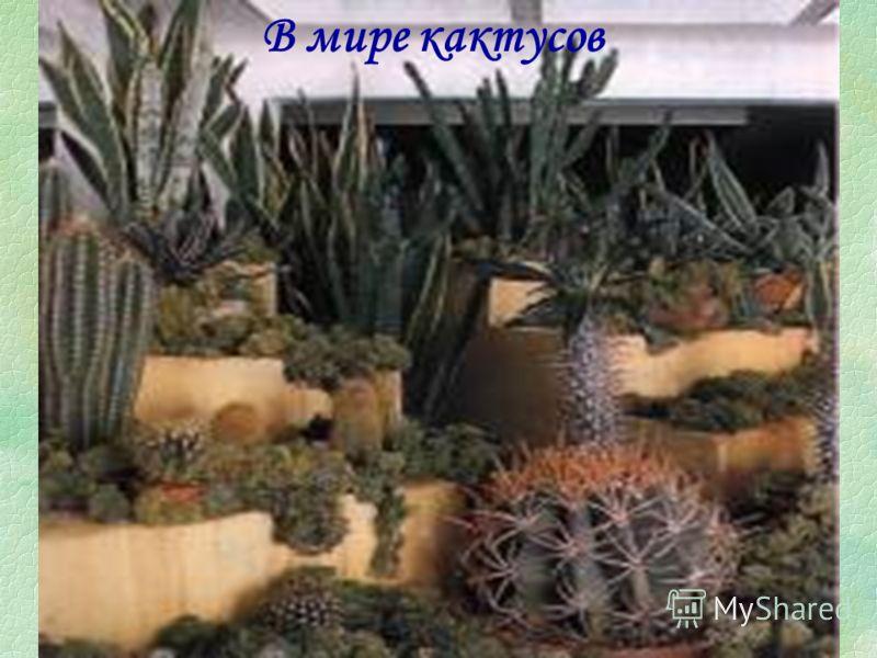 Висячие сады Характерной особенностью современного интерьера является использование вертикальных плоскостей. Кашпо крепят на кронштейнах у капитальных стен, помещают на декоративные решетки и полки, располагают на этажерках и стеллажах. Прекрасно себ