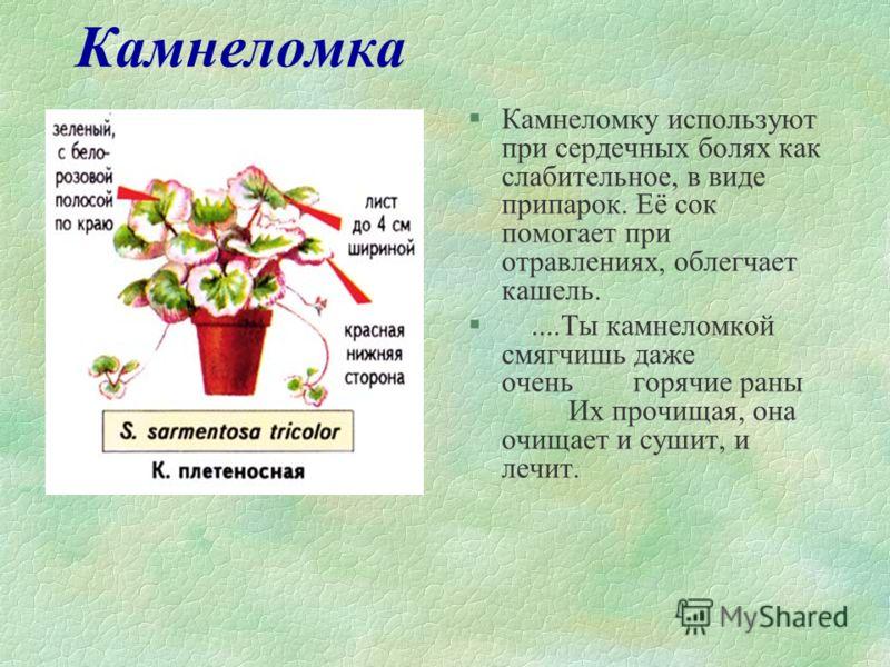Акка или фейхоа §Обладает значительными фитонцидными свойствами. Плоды фейхоа богаты йодом. Употребление их в пищу является профилактической мерой в предупреждении растройств функции щитовидной железы. §