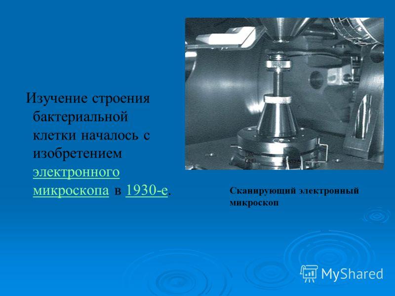 Изучение строения бактериальной клетки началось с изобретением электронного микроскопа в 1930-е. электронного микроскопа1930-е Сканирующий электронный микроскоп