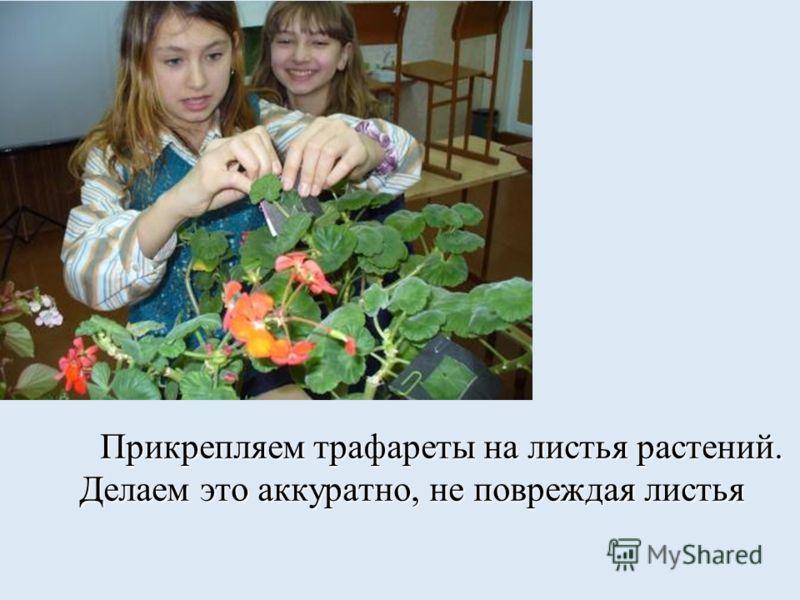 2 этап Извлекаем растения
