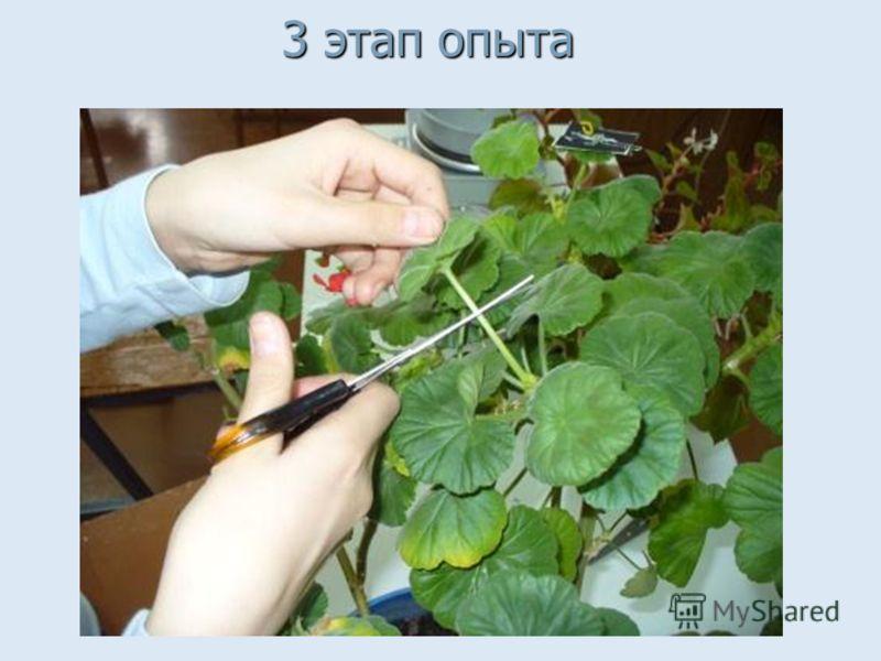 Помещаем растения на солнечный свет