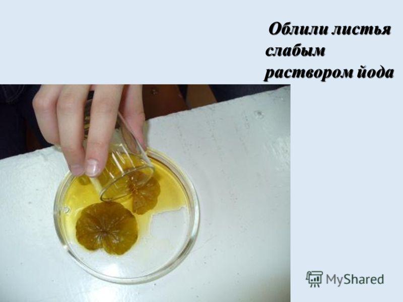 Хлорофилл «переходит» в спирт