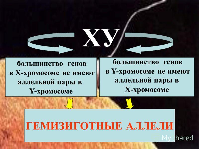 большинство генов в Х-хромосоме не имеют аллельной пары в Y-хромосоме большинство генов в Y-хромосоме не имеют аллельной пары в Х-хромосоме ХУ ГЕМИЗИГОТНЫЕ АЛЛЕЛИ