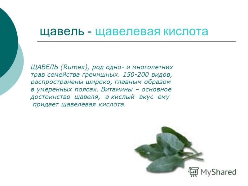 щавель - щавелевая кислота ЩАВЕЛЬ (Rumex), род одно- и многолетних трав семейства гречишных. 150-200 видов, распространены широко, главным образом в умеренных поясах. Витамины – основное достоинство щавеля, а кислый вкус ему придает щавелевая кислота