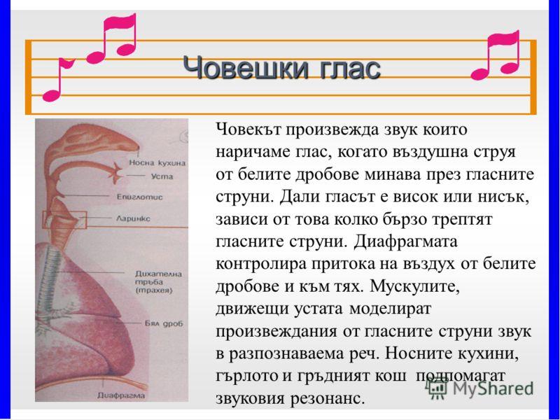Човешки глас 7/4/2012 Човекът произвежда звук които наричаме глас, когато въздушна струя от белите дробове минава през гласните струни. Дали гласът е висок или нисък, зависи от това колко бързо трептят гласните струни. Диафрагмата контролира притока