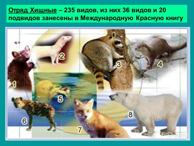 Отряд Хищные – 235 видов, из них 36 видов и 20 подвидов занесены в Международную Красную книгу