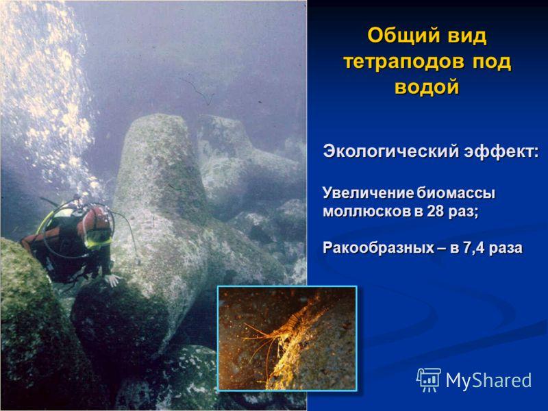 Общий вид тетраподов под водой Экологический эффект: Увеличение биомассы моллюсков в 28 раз; Ракообразных – в 7,4 раза