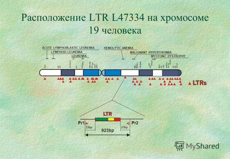 Расположение LTR L47334 на хромосоме 19 человека Z N F 1 3 4 Z N F Z N F ACUTE LYMPHOBLASTIC LEUKEMIA LYMPHOID LEUKEMIA LEUKEMIA HEMOLYTIC ANEMIA MALIGNANT HYPERTHERMIA MYOTONIC DYSTROPHY Pr1Pr2 33bp23bp 923bp